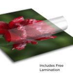Vinyl Adhesive Printing 2
